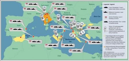 Schnabelwal-Unterschutzstellung ist weiterer Schritt gegen Ölsuche vor Balearen