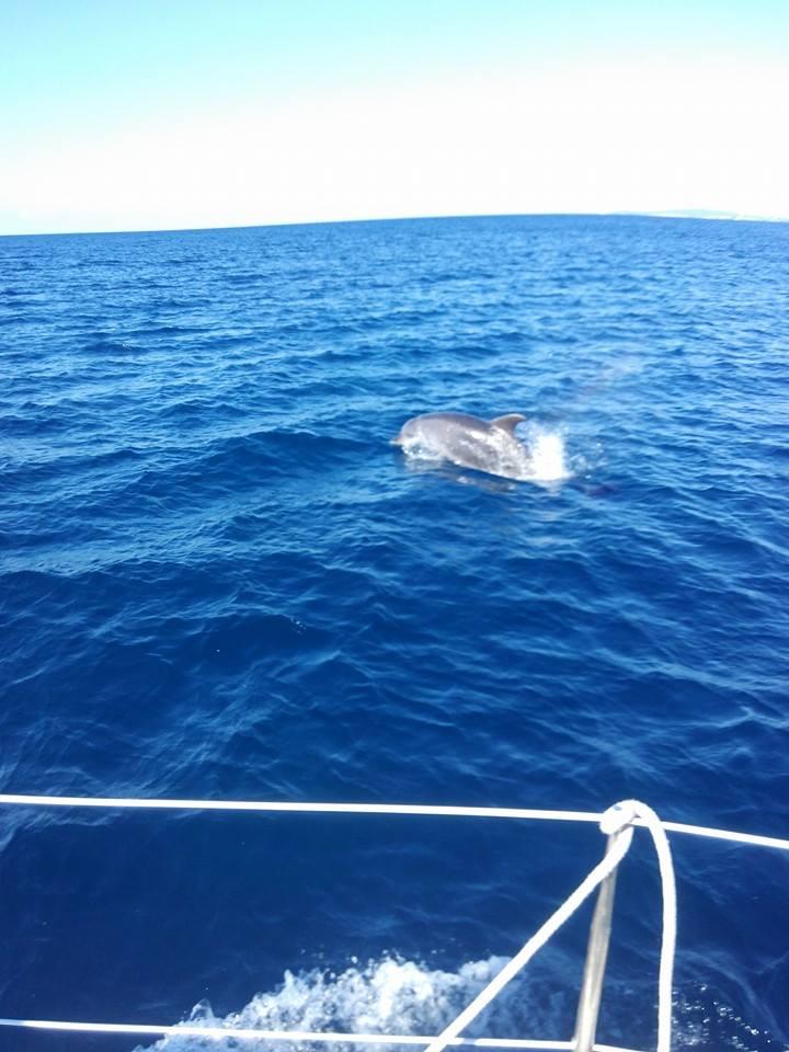 Delphin an der Küste von Mallorca News Portal Mallorca die Info Web Seiten der Balearen