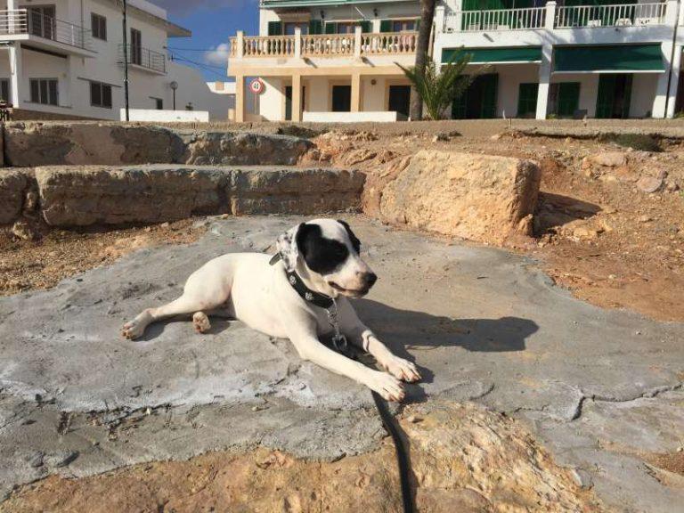 Hundebesitzer werden auf Mallorca zur Kasse gebeten